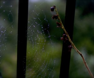 web-in-the-rain